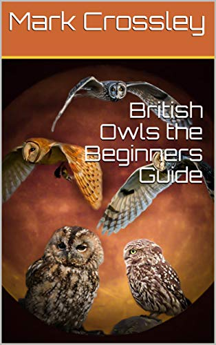 British Owls the Beginners Guide (English Edition)