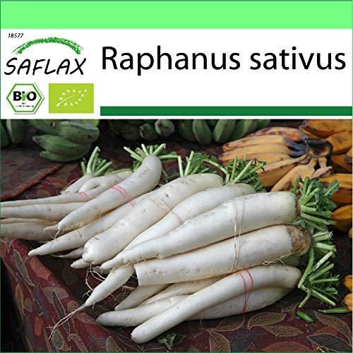 SAFLAX - BIO - Ravanello - Daikon giapponese - 100 semi - Raphanus sativus