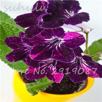 ! 100 Pcs/Lot Bonsai Violet Seeds, African Violet Flower Seeds, Natural Growth Diy For Home Garden Planting