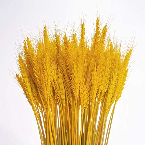 KABOGINS 100 Stems Dried Wheat Stalks Golden Dried Wheat Sheave Bundle Flower for Home Kitchen Christmas Wedding(17 inch) (Warm Golden Color)