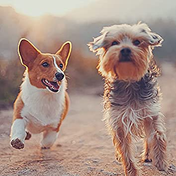 Trio Jazz - Background Music for Dogs