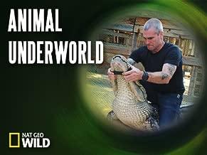 Animal Underworld Season 1