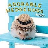 Adorable Hedgehogs 2020: 16-Month Calendar - September 2019 through December 2020