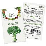 OwnGrown Premium Brokkoli Samen (Brassica oleracea), Brokkolisamen zum Anbauen, Saatgut für rund 20 Brokkoli Pflanzen