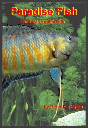 Paradise Fish (English Edition)