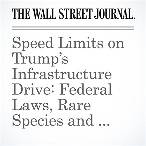 Speed Limits on Trump's Infrastructure Drive: Federal Laws, Rare Species and Nimbys copertina