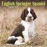 English Springer Spaniel Puppies M 2019 (Mini Square)