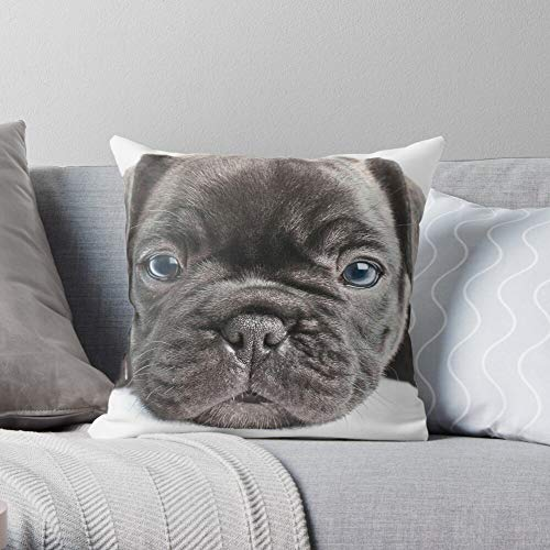 Puppy Pet Cute Portrait Bulldog Adorable Portraiture French Family Frenchie -Animal - Decorative Pillow Cases Home Decor Customize Polyester Pillowcase Double Side Printed Customize