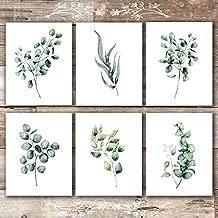 Eucalyptus Leaves | Botanical Prints Wall Art (Set of 6) - Unframed - 8x10s