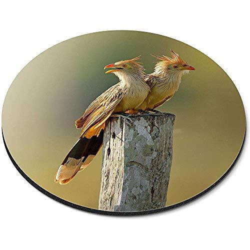 Ronde muismat - Guira Koekoek paar vogels Brazilië Office Gift