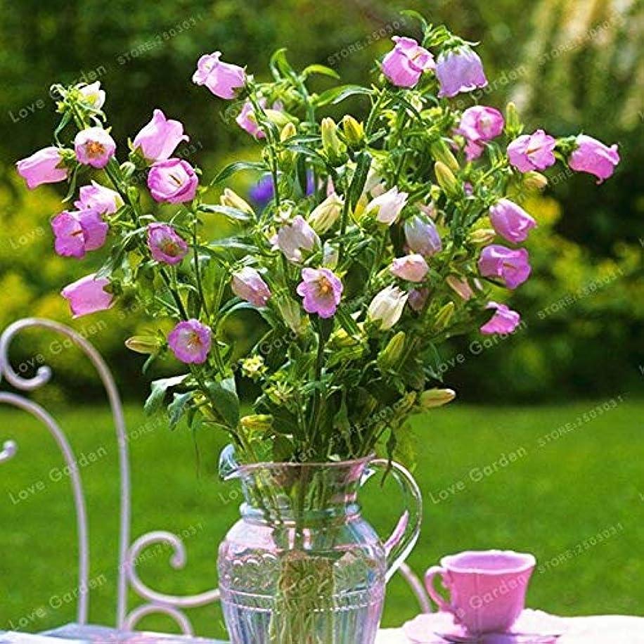 Plant Sedum - Flower Pictum Bonsai Striatum 30 Pcs Garden Easy to Grow Campanula (It is Seed not Plant) - by Abuldahi
