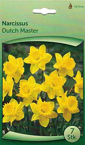 """35 Zwiebeln Narzissen\""""Dutch Masterr\"""" gelb- seperat verpackt - wunderschön, einfach, natürlich"""