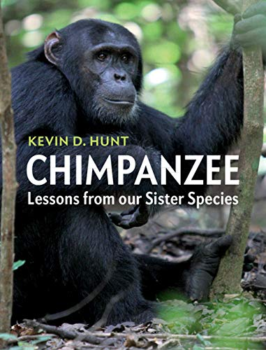 Chimpanzee (Lessons from our Sister Species)