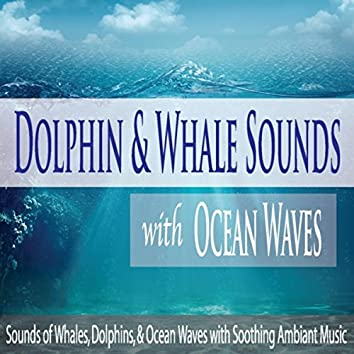 Dolphin & Whale Sounds With Ocean Waves: Sounds of Whales, Dolphins, & Ocean Waves With Soothing Ambiant Music