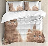 Juego de funda nórdica animal, lindos gatitos, gatos, gatos, felino dulce, guardería infantil, tema de gatito, ilustraciones, juego de cama decorativo de 3 piezas con 2 fundas de almohada, blanco cara