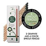 Sprout – crayons de couleur | boîte de 8 crayons en bois naturel bio
