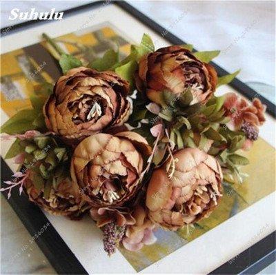 Vente Hot 10 pièces/sac Graines Pivoine Graines de fleurs Jardin et plantes d'intérieur en pot Bonsai Pivoine Graines jardin Facile à cultiver 5