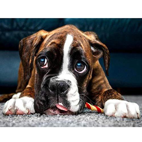 APCHYWELL Boxer Hund Tier Diamant Malerei Bohren Voll DIY 5D Kits Strass Kristall Stickerei Mosaik Bild Kreuzstich Kunst Handwerk Für Home Wall Decor Geschenk,40X50Cm