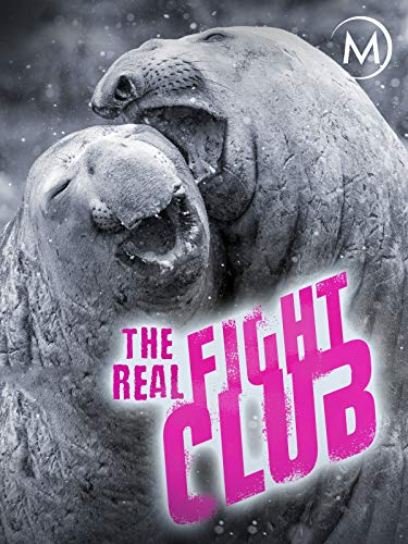 The Real Fight Club