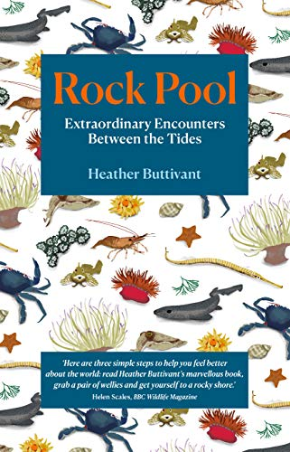 Rock Pool: Extraordinary Encounters Between the Tides - A Life-Long Fascination Told in Twenty-Four Creatures: A Life-long Obsession told in Twenty Creatures (English Edition)