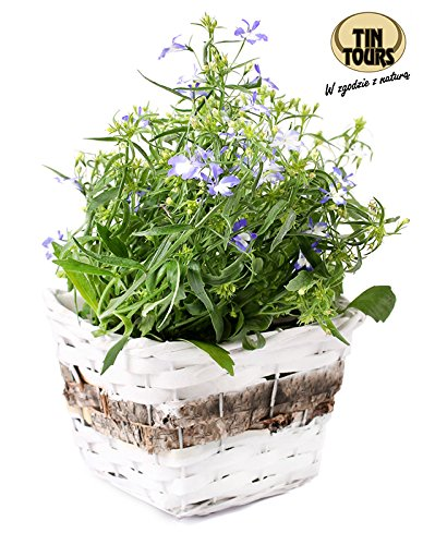 Pot pour plantes/fleurs en osier/panier pour pot de fleurs 18 x 18 x 12h cm
