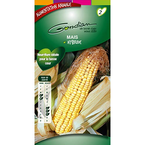 gondian - Graines de Maïs Hybride GONDIAN