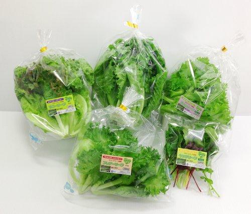 【洗わなくていい野菜】クリーンリーフギフト35 ギフト用優良株をピックアップ リーフレタス べビーリーフの基本ギフトセット
