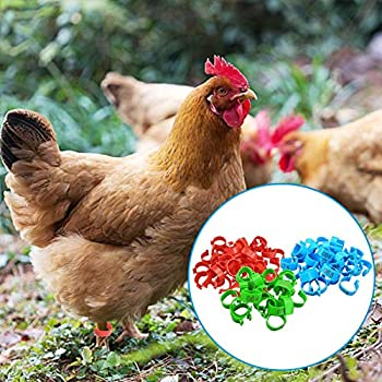 Further 100 Pièces/Bagues Anneaux De Pattes, 18 Mm 001-100 Numérotées en Plastique Volailles Poulets Canards Bagues De Pattes d'oie Bagues pour Poussins De Colombe Poule Identification d'oiseaux