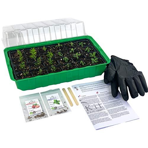 KliKil Smart Garden de Plantas Naturales Kit huerto Urbano con 1 semillero, Guantes, 2 paletas de Madera, Dos Semillas aromaticas ecológicas seleccionadas, no OGM, de Menta y Fresas