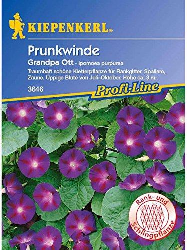 Ipomoea purpurea Prunkwinde Grandpa Ott dunkelblau