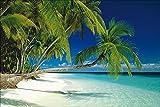 1art1 40778 Strände - Malediven, Palmen Poster (91 x 61 cm)