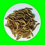 1,0kg de gusanos de la harina secos, alimento para reptiles, alimento para roedores, alimento para pájaros.