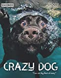 Crazy Dog Calendar 2022: Gifts for Friends and Family with 18-month Monthly Calendar in 8.5x11 inch
