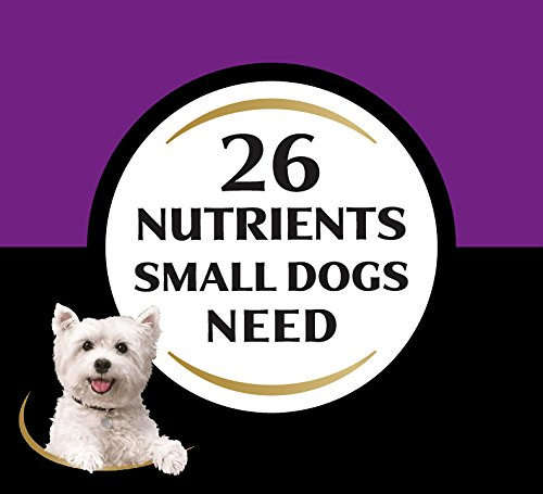 Dog | CESAR Filet Mignon Flavor With Spring Vegetables Dry Small Breed Dog Food 5 Pounds, Gym exercise ab workouts - shap2.com