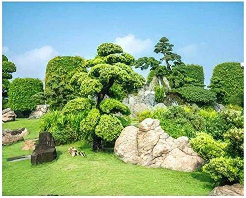 ZYCD Ho Chi Minh City Vietnam November 19th 2019 Bonsai Garden Beauty Paint by Numbers Kits for Adults Kids DIY Wall Art Picture Framed Canvas Oil Painting Set Digital Paintworks for Beginners