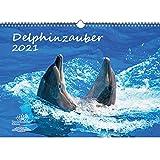Delphinzauber Calendario DIN A3 para 2021 delfín delfín delfín set de regalo: además 1 tarjeta de felicitación y 1 tarjeta de Navidad – Maravilla