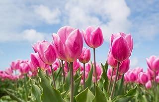 Rosa, Tulipán, Bulbo Pintura Al Óleo Pintura Por Números Pintados A Mano Lienzo Cuadros Al Óleo Fotos Sin Marco 50x60cm