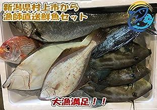 漁師直送鮮魚セット 新潟県村上市寝屋漁港【昭和丸】の特選鮮魚 (初級)