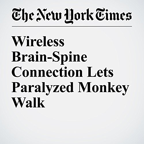 Wireless Brain-Spine Connection Lets Paralyzed Monkey Walk audiobook cover art