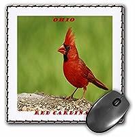 "3D Rose""State Bird of Ohio Red Cardinal"" Matte Finish Mouse Pad - 8 x 8"" - mp_50941_1 [並行輸入品]"