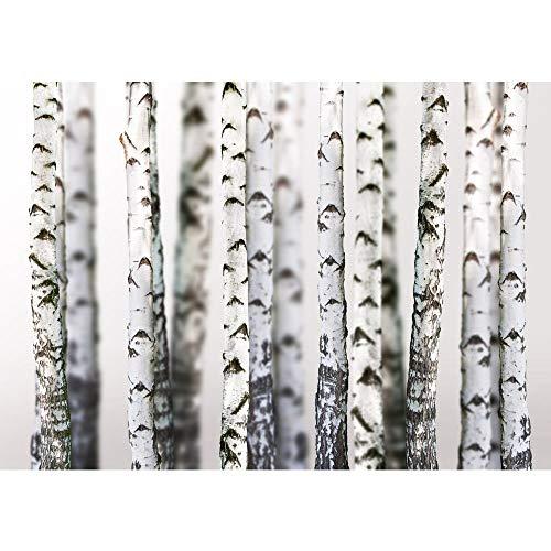 Vlies Fototapete 350x245 cm PREMIUM PLUS Wand Foto Tapete Wand Bild Vliestapete - BLACK AND WHITE BIRCH TRUNKS - Birkenwald 3D perspektive Birke Stämme Wald - no. 044