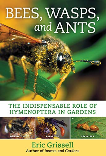 Bees, Wasps, and Ants: The Indispensable Role of Hymenoptera in...