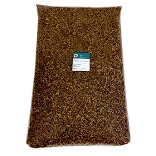 algova vers de Farine séchés - Nourriture Naturelle pour Poissons d'ornement, Oiseaux d'ornement, Tortues et hérissons (10kg)