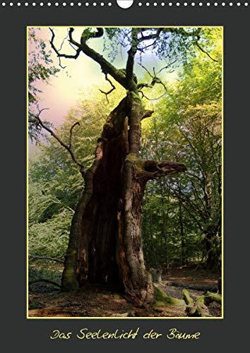 Das Seelenlicht der Bäume (Wandkalender 2021 DIN A3 hoch)