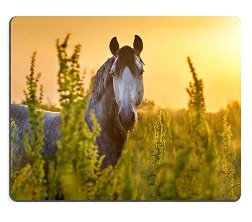Luxlady Gaming Mousepad ID: 41534559 Portret van mooi grijs lusitano paard bij zonsopgang