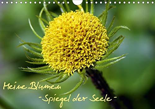 Meine Blumen – Spiegel der Seele (Wandkalender 2020 DIN A4 quer): Blumenkalender (Monatskalender, 14 Seiten )