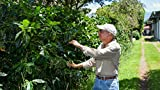 Virtually visit a coffee farm in the Central Valley Highlands of...
