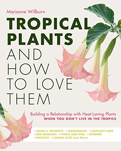 Tropical Plants and How to Love Them: Building a Relationship with Heat-Loving Plants When You Don't Live In The Tropics - Angel's Trumpets – Lemongrass ... Gingers – Hibiscus – Canna Lilies and More!