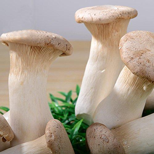 DaDago 50 Pz/Pacco Semi di Funghi da Giardino Piantare Pleurotus Commestibile Semi di Eryngii Semi di Ortaggi