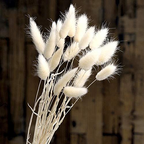 Garneck Natürliche getrocknete Blumen 20pcs Kaninchenendstück-Grasbündel Lagurus ovatus blüht Blumenstrauß phragmites communis Blumenstrauß-Foto-Stützen für Hochzeitsfestausgangsdekorationsweiß